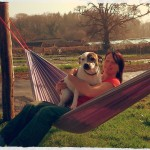 Dogs like hammocks too!